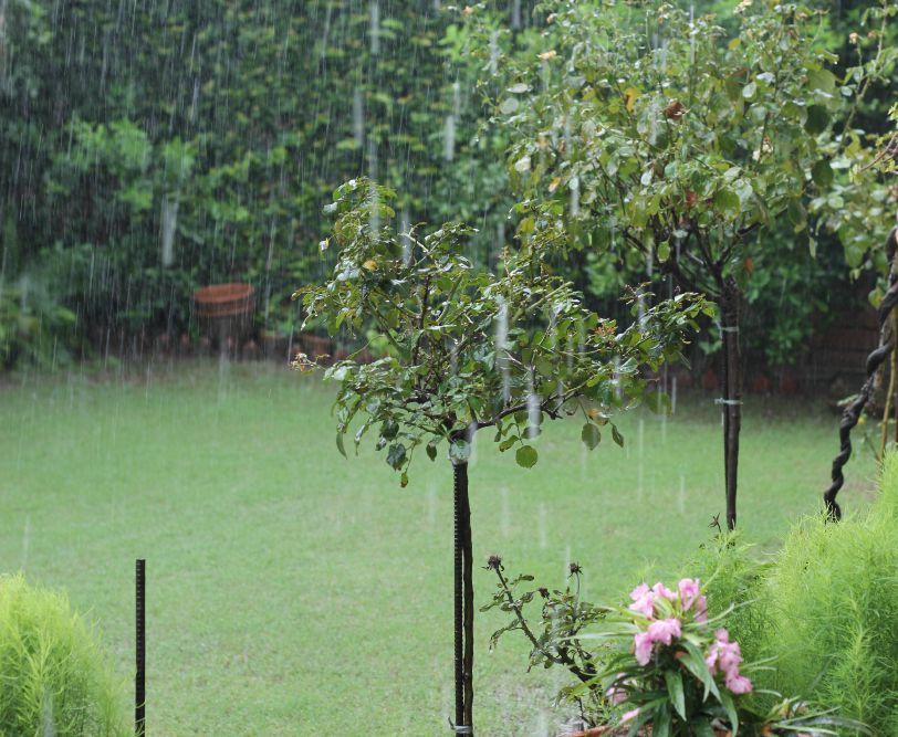 rainy-birthday